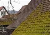 Copper Wire Moss Roof Images