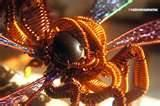 Photos of Copper Wire Dragonfly