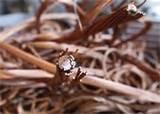 Photos of Copper Wire Worth Per Pound